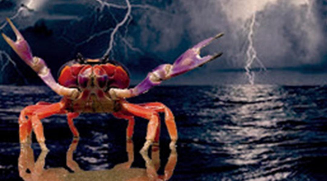 """""""La noche de los cangrejos"""": Entre el costumbrismo y la magia"""