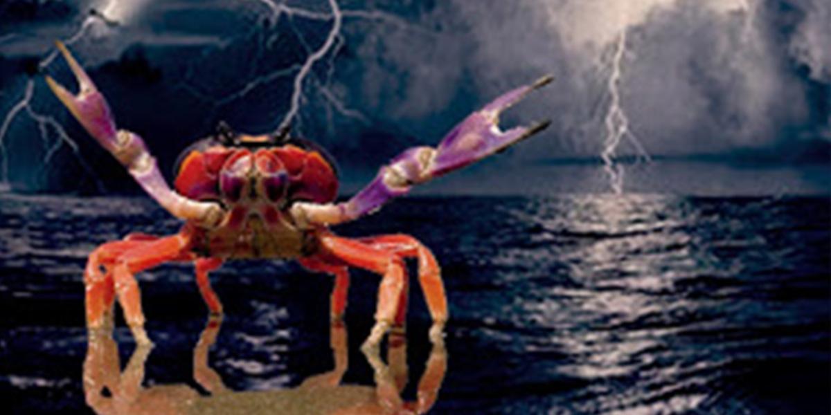 «La noche de los cangrejos»: Entre el costumbrismo y la magia